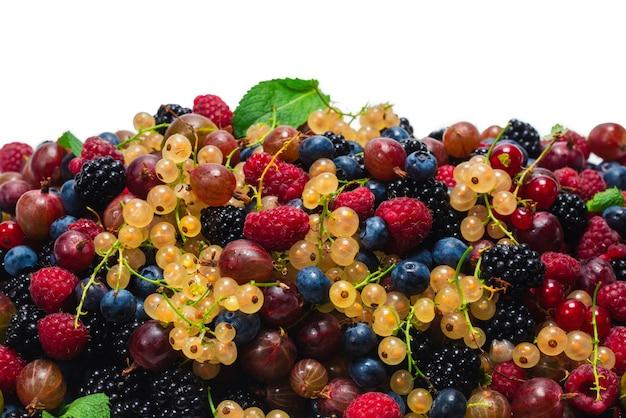 Agrest, jagody, morwa, maliny, porzeczki białe i czerwone na białym tle.