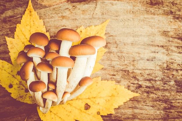 Agrocybe aegerita mushrooms