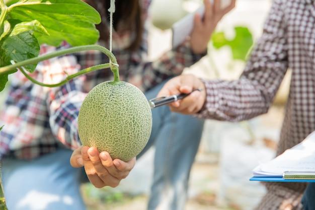 Agronom bada rosnące sadzonki melona w gospodarstwie, rolników i badaczy w analizie rośliny.