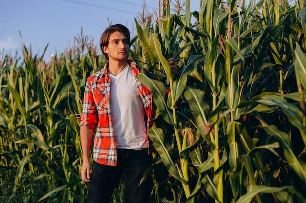 Agronom człowiek stoi w polu kukurydzy i starannie przejęcie kontroli nad wydajnością