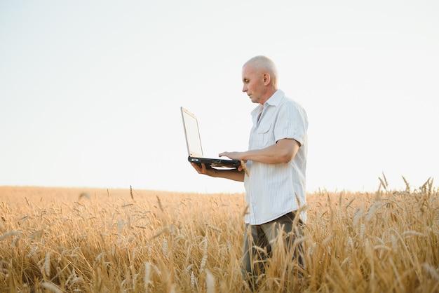 Agronom lub rolnik korzystający z laptopa podczas inspekcji ekologicznego pola pszenicy