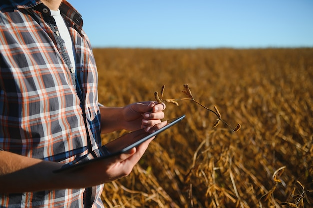 Agronom sprawdza uprawę soi w dziedzinie rolnictwa - koncepcja agro - rolnik na plantacji soi w gospodarstwie.