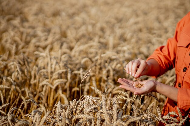 Agronom trzymający probówkę z próbką pszenicy
