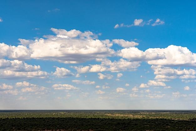 Akacjowy drzewo z niebieskiego nieba tłem w etosha parku narodowym, namibia. afryka południowa