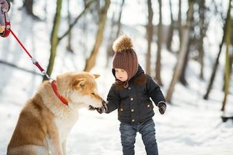 Akita-inu bierze coś z ręki małego chłopca stojącego w zimowym parku