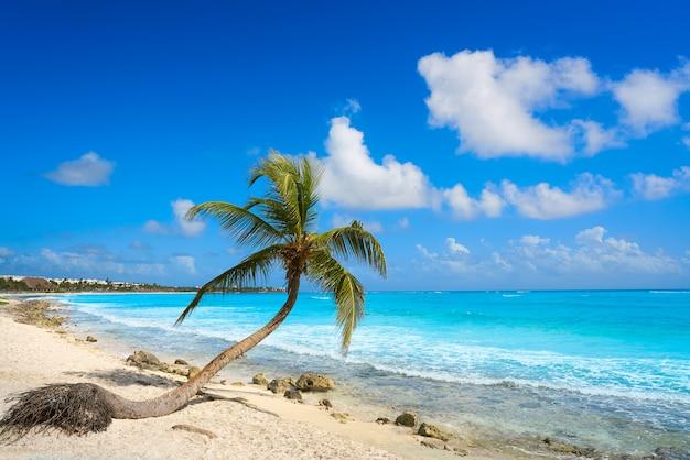 Akumal kokosowej palmy plażowy riviera maya