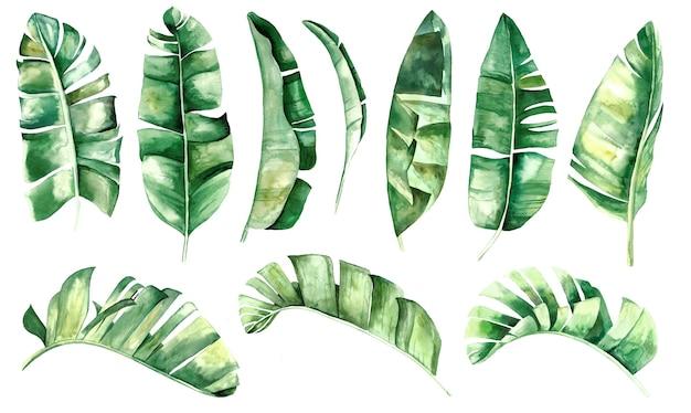 Akwarela bananowe tropikalne liście zestaw ilustracji na białym tle