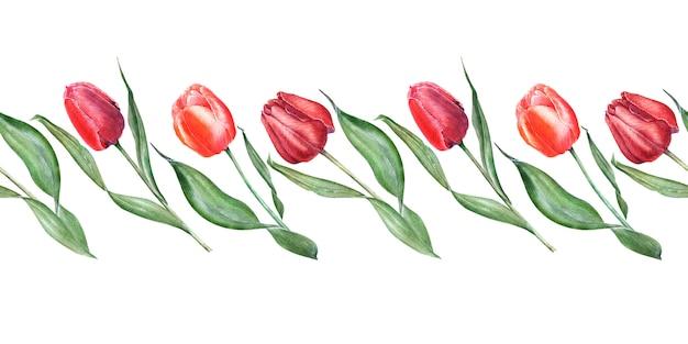 Akwarela bezszwowe granica z eleganckimi czerwonymi tulipanami. pąki, kwiaty i liście