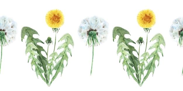 Akwarela Bezszwowe Granica Z Stylizowane Rośliny Mniszka Lekarskiego Premium Zdjęcia