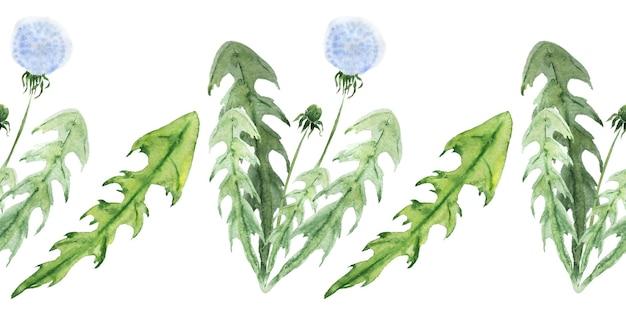Akwarela bezszwowe granica z stylizowane rośliny mniszka lekarskiego