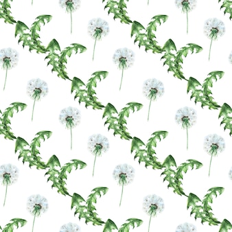 Akwarela bezszwowe wzór z stylizowane rośliny mniszka lekarskiego