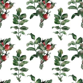 Akwarela bezszwowe wzory z dojrzałych jasnych owoców dzikiej róży