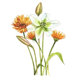 Akwarela białe lilie. dziki kwiat ustawia odosobnionego na bielu.