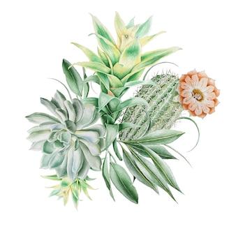 Akwarela bukiet z kaktusami i sukulentami. ilustracja. wyciągnąć rękę.
