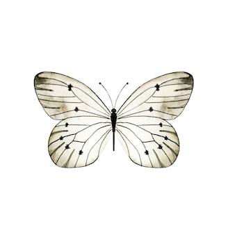 Akwarela czarno-biały motyl