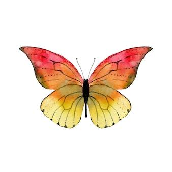Akwarela czerwony motyl