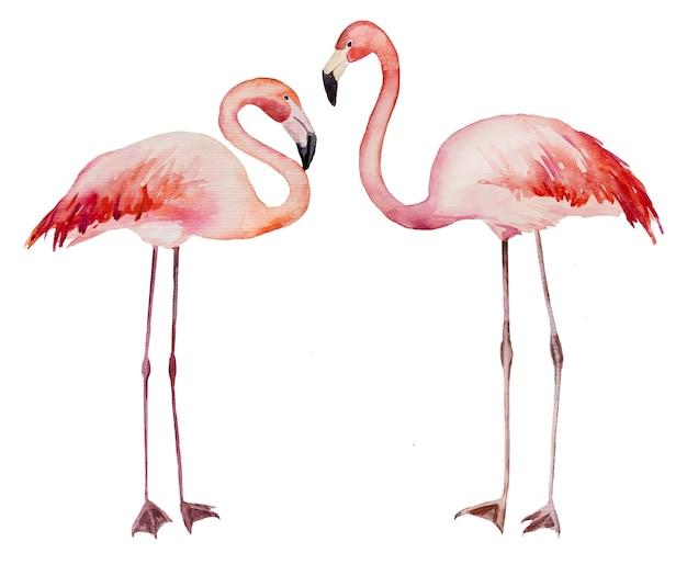 Akwarela dwa flirtujące różowe flamingi. egzotyczne ptaki na białym tle ilustracja do papeterii ślubnej, pozdrowienia, tapety, moda, plakaty