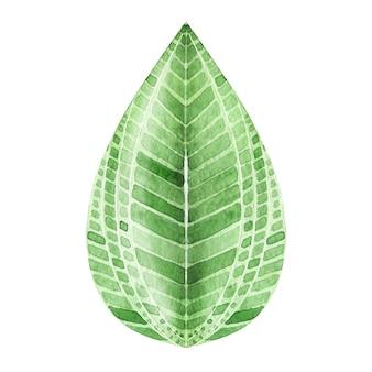 Akwarela egzotyczny liść