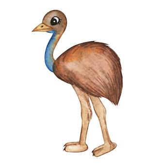 Akwarela emu struś, śliczne zwierzęta akwarela struś, australijskie zwierzęta