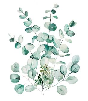 Akwarela eucaliptus liście zestaw ilustracji. elementy papeterii, zaproszeń, kart okolicznościowych, logo, wzorów, naklejek