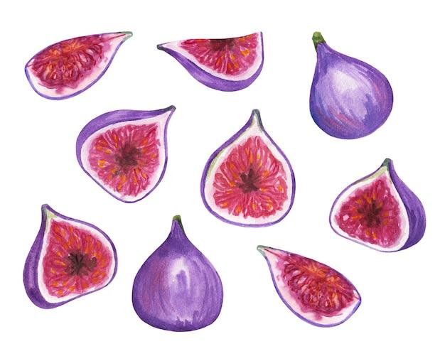 Akwarela figi clipart, ilustracja na białym tle, zestaw soczystych fig, ręcznie rysowane malarstwo