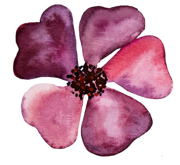 Akwarela fioletowe dzikie kwiaty ilustracje na białym tle