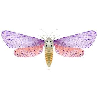 Akwarela fioletowy motyl