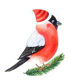 Akwarela gil. robin zimowy z czerwonymi piórami na piersi.