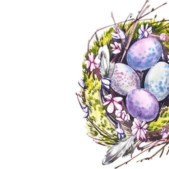 Akwarela gniazdo z ptasimi jajami