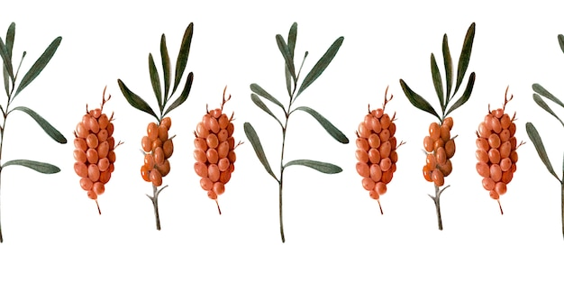 Akwarela granicy z jagodami, gałązkami i liśćmi rokitnika
