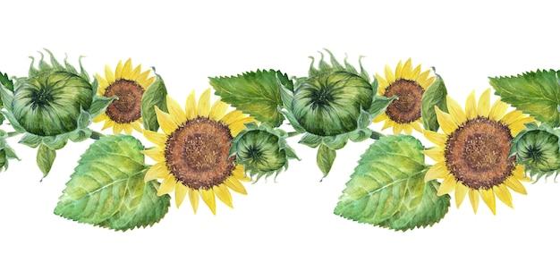 Akwarela granicy z jasnymi słonecznikami, liśćmi i pąkami rośliny
