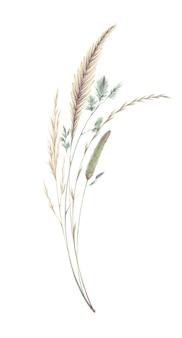 Akwarela ilustracja bukiet z rocznika kłoski źdźbła trawy na białym tle