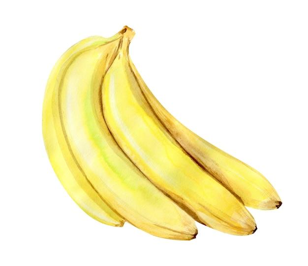 Akwarela ilustracja owoce tropikalnych bananów