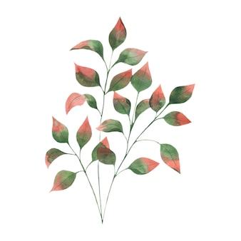 Akwarela ilustracja z jesiennymi liśćmi gałęzie zielone liście z czerwonymi końcówkami na białym tle
