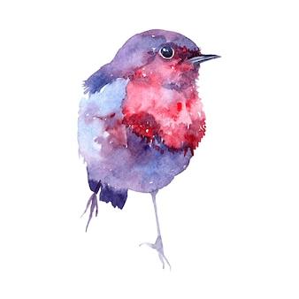 Akwarela ilustracja z ptakiem.