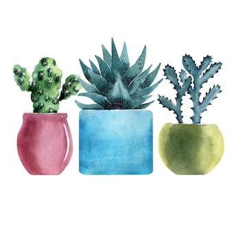 Akwarela ilustracja z różnymi rodzajami kaktusów w kolorowych doniczkach