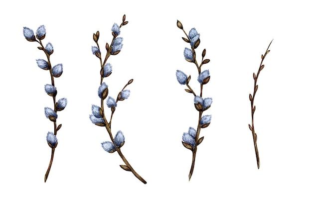 Akwarela ilustracja zestaw gałązek wierzby cipki. wiosenne gałęzie. dekoracje wielkanocne. elementy projektu wektor na białym tle. wielkanoc, religia, tradycja, niedziela palmowa.