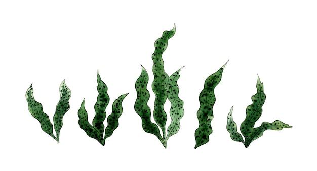 Akwarela ilustracja zestaw zielonych alg morskich flora natura roślin wodnych rośliny akwariowe
