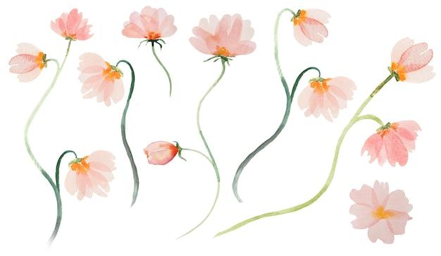 Akwarela jasnoróżowe dzikie kwiaty ilustracje na białym tle