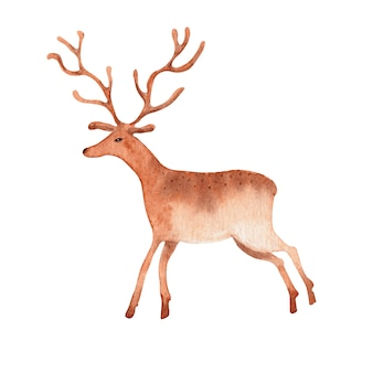 Akwarela jelenia na białym tle