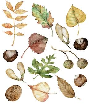 Akwarela Jesień Zestaw Jesiennych Roślin Premium Zdjęcia