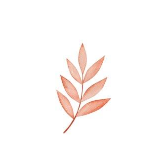 Akwarela jesienny liść na białym tle