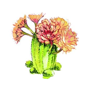 Akwarela kaktus na białym tle. doskonale nadaje się do kart, plakatów, banerów, zaproszeń, kart okolicznościowych, wydruków.