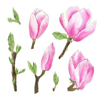 Akwarela magnolia kwiaty na białym tle zestaw. ręcznie rysowane ilustracje