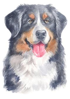 Akwarela malarstwo berneńskiego psa pasterskiego