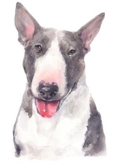 Akwarela malarstwo bull terrier