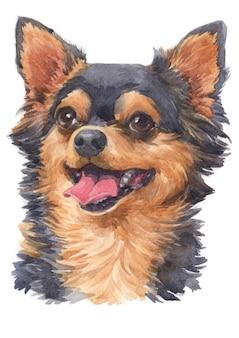 Akwarela malarstwo chihuahua