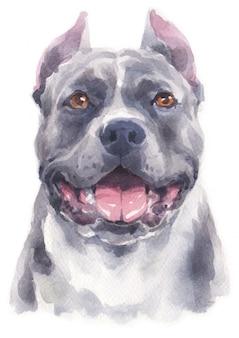 Akwarela malarstwo psa pitbull