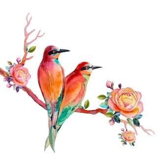 Akwarela malarstwo realistyczne ilustracja kolorowy ptak piękny i róża
