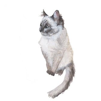 Akwarela malarstwo szarego kota